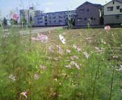 kosumosu2009