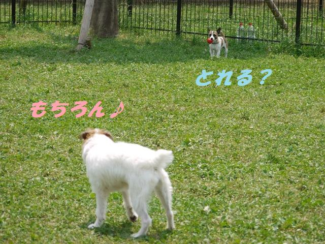 104_20090624113613.jpg
