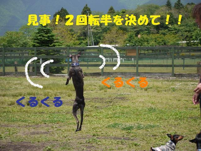 163_20090606013542.jpg