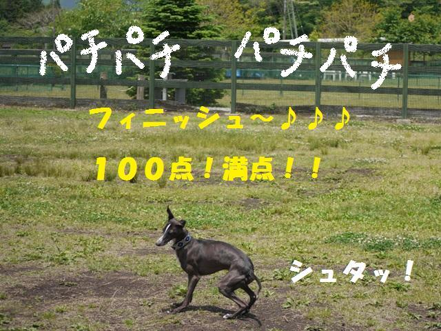 164_20090606013612.jpg