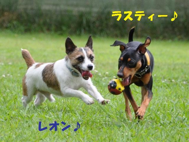 09-7-20 松戸 D.R 008