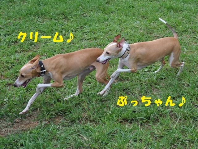 09-7-20 松戸 D.R 260