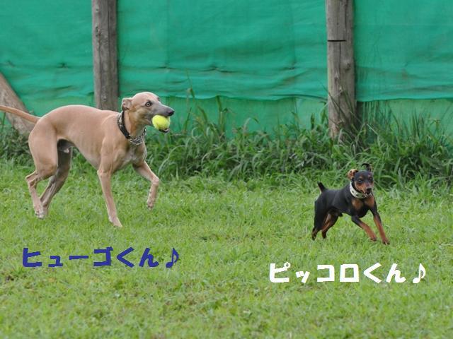 09-7-20 松戸 D.R 620
