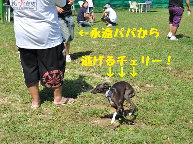 9.6 松戸イタ祭り 069