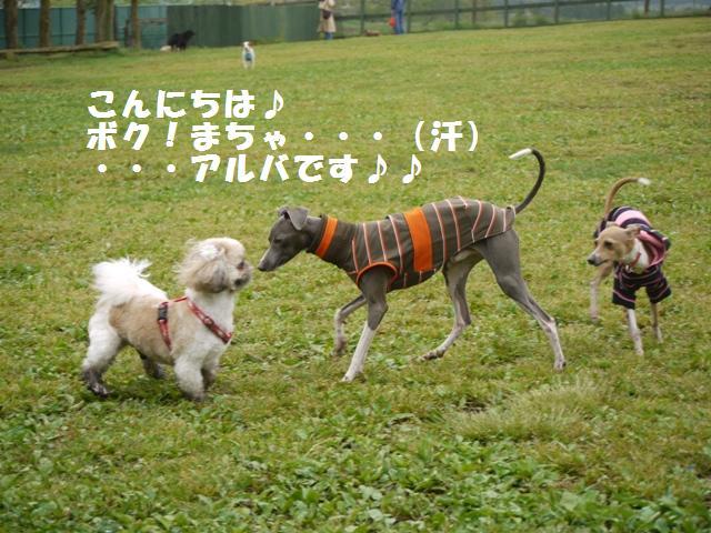 323_20090511230629.jpg