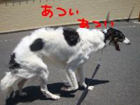 DSC04368o.jpg