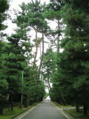 松林を通る