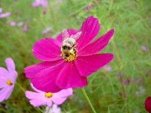 PICT1344_convert_20080916133155.jpg