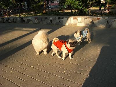 近所の犬と090523