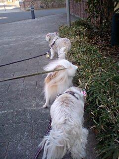 三頭連れ1