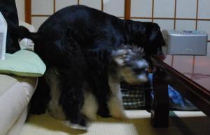 スッポリ!!~(^◇^)/ぎゃはは