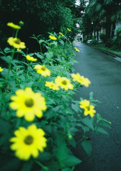 aoyada_01.jpg
