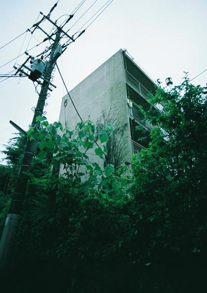 aoyada_02.jpg