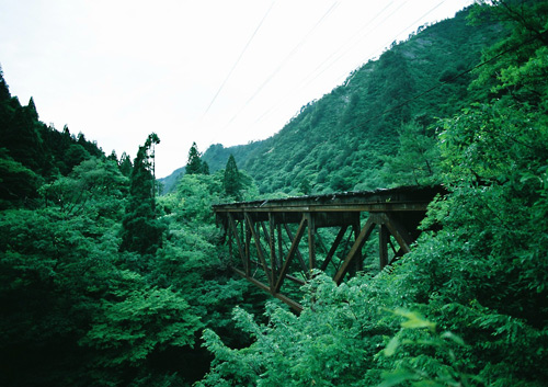 tsujigawa06_1.jpg