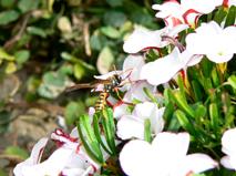 蜂P1730639