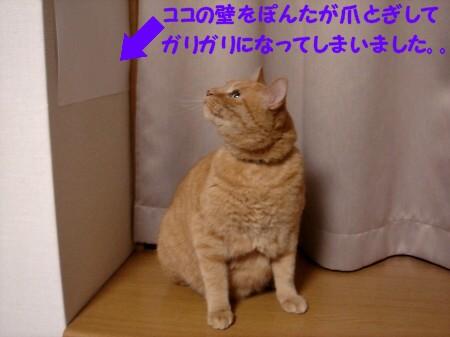 置物ぉ? (7)