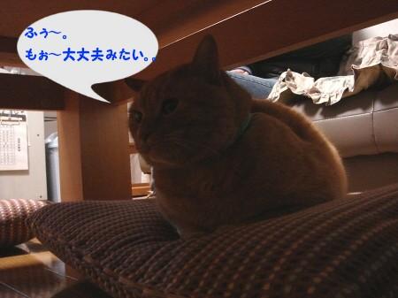 拭き拭き嫌? (5)