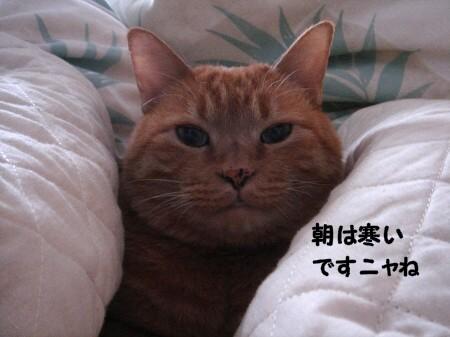 朝寝坊? (1)