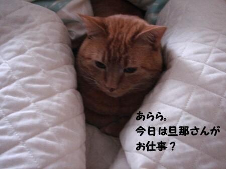 朝寝坊? (2)