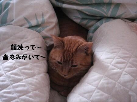 朝寝坊? (3)