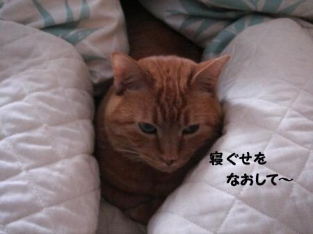 朝寝坊? (4)