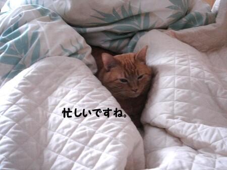 朝寝坊? (5)