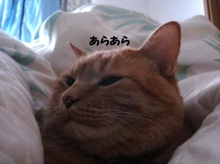 朝寝坊? (7)