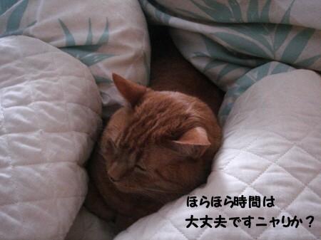 朝寝坊? (8)