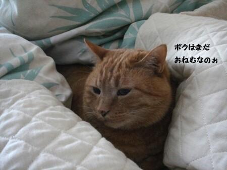 朝寝坊? (10)