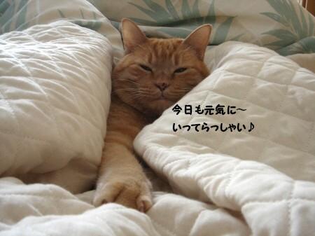 朝寝坊? (11)