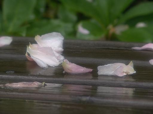 ニュードーンの花びら