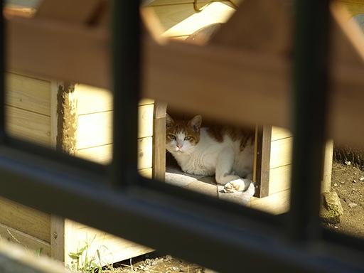 犬小屋の猫