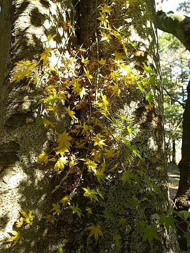 秋の木陰で