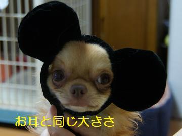 一番ネズミさんっぽい