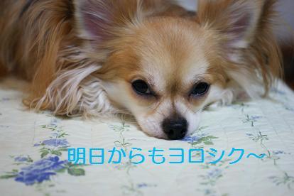 ○京電力さん頼み