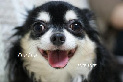 珍しくまともな笑顔