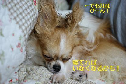 寝てごまかせ!