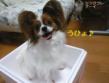 はっぽーすちろーる犬