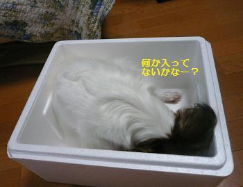 豆腐の匂いがしますか?