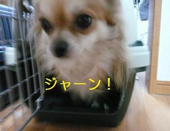 ぴのだ!!