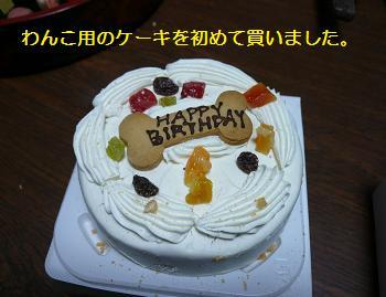 人間のケーキに似ていますね