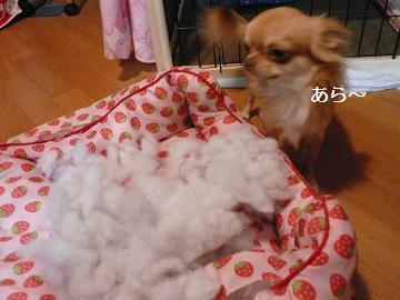 綿、出てるねぇ~