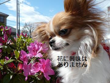 花とみる1