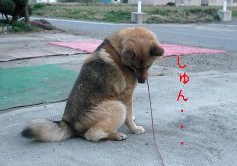 泣いちゃう(T_T)