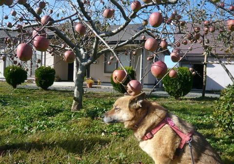 リンゴの国の わんこです