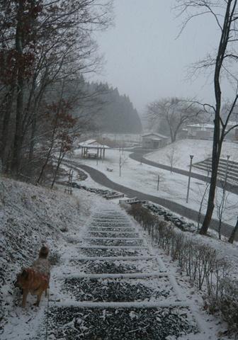広い背中に雪が…(^m^)