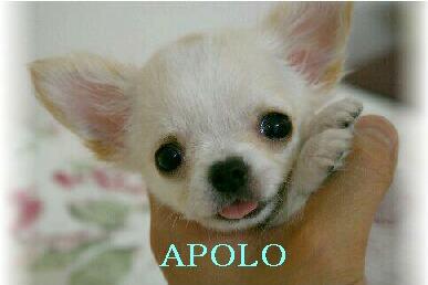 apolocuccia2.jpg