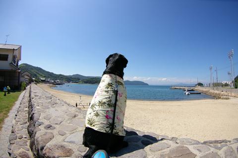 ①海を眺める男