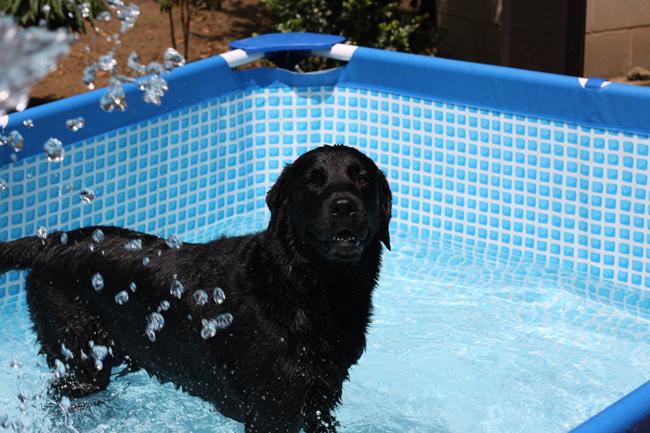 プールでいい顔