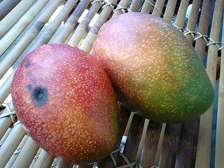 またマンゴー